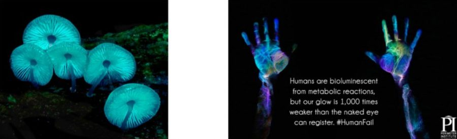 LIght examples of mushrooms in the dark , and hand prints photons and laser